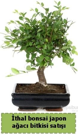 İthal bonsai saksı çiçeği Japon ağacı satışı  Bartın İnternetten çiçek siparişi