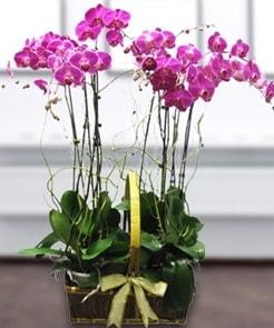 7 dallı mor lila orkide  Bartın çiçek gönderme sitemiz güvenlidir