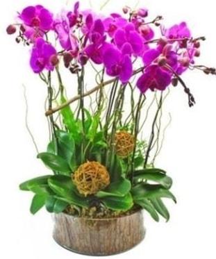 Ahşap kütükte lila mor orkide 8 li  Bartın internetten çiçek satışı
