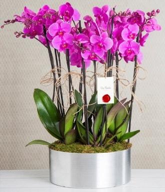 11 dallı mor orkide metal vazoda  Bartın çiçek gönderme sitemiz güvenlidir
