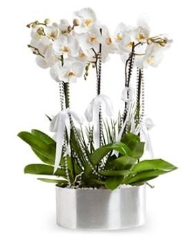 Beş dallı metal saksıda beyaz orkide  Bartın çiçek yolla