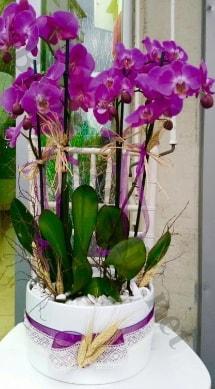 Seramik vazoda 4 dallı mor lila orkide  Bartın online çiçek gönderme sipariş