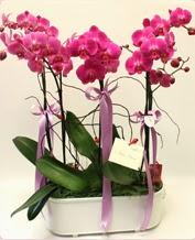 Beyaz seramik içerisinde 4 dallı orkide  Bartın ucuz çiçek gönder