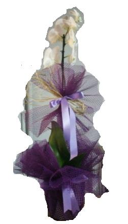Tek dallı beyaz orkide süper kalite ithal  Bartın çiçek siparişi sitesi