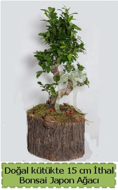 Doğal kütükte İthal bonsai japon ağacı  Bartın çiçek gönderme