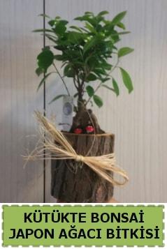 Kütük içerisinde doğal bonsai ağacı  Bartın çiçekçi telefonları