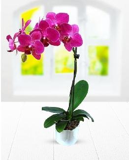 Tek dallı mor orkide  Bartın çiçek satışı