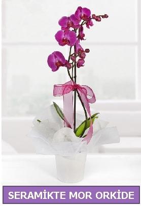 Seramik içerisinde birinci kalite tek dallı mor orkide  Bartın İnternetten çiçek siparişi