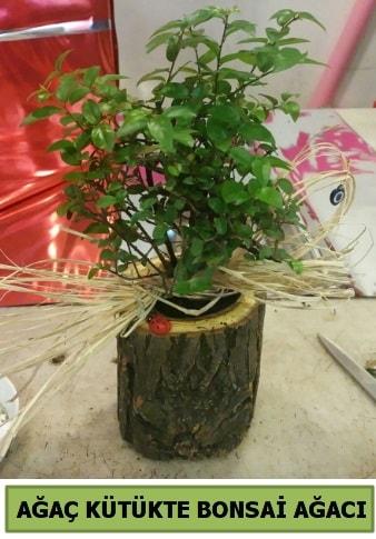 Doğal ağaç kütük içerisinde bonsai ağacı  Bartın çiçek gönderme sitemiz güvenlidir