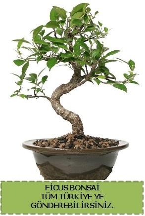 Ficus bonsai  Bartın çiçek gönderme sitemiz güvenlidir