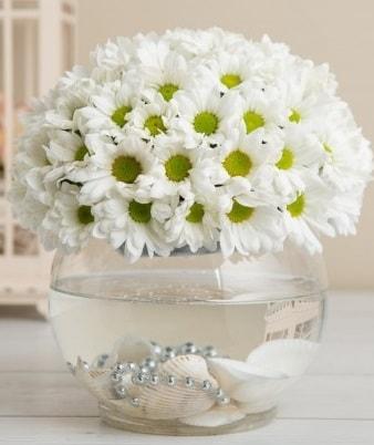 Fanusta beyaz Papatya  Bartın çiçek satışı